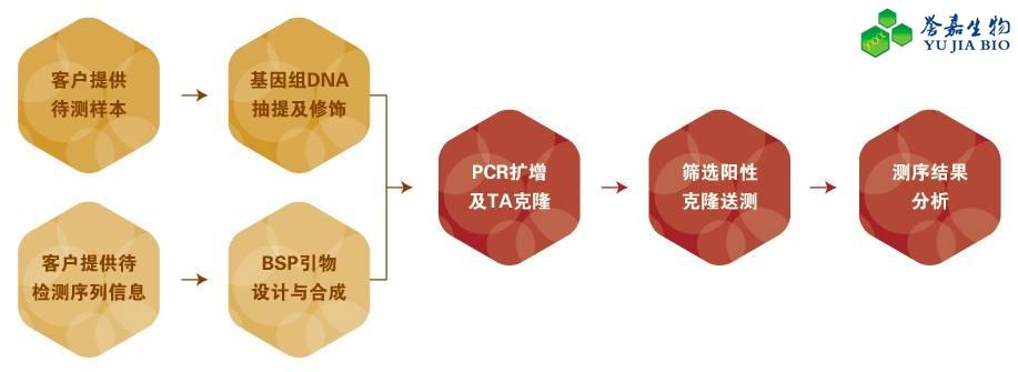 甲基化检测方法(BSP-直接测序法)