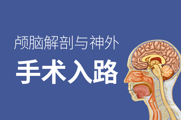 颅脑解剖与神外手术入路