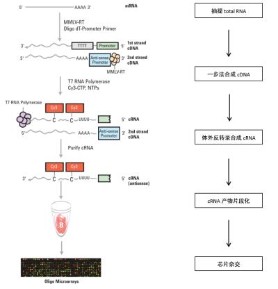 基因表达谱芯片