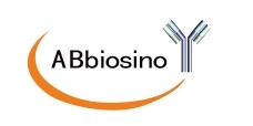 兔抗人肌红蛋白多克隆抗体、MYO兔多抗、MB抗体