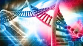 血液线粒体和核DNA双提试剂盒