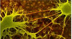 大肠杆菌BL21 Star(DE3)化学感受态细胞
