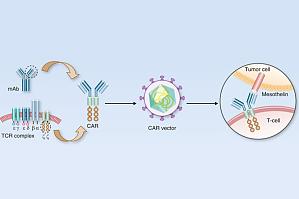 CAR-T 细胞免疫疗法