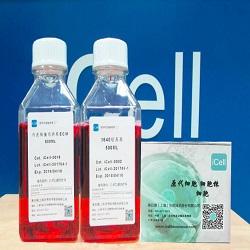 人脐带间充质干细胞/免疫荧光鉴定