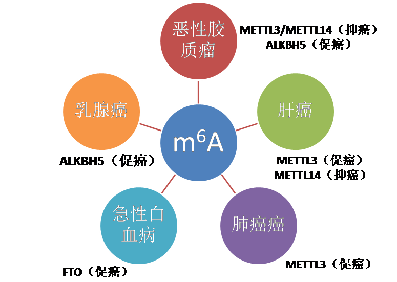 m6A RNA甲基化测序