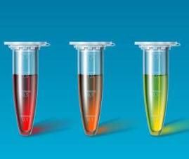 小鼠基质金属蛋白酶10(MMP-10)PCR试剂盒