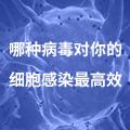 哪种病毒对你的细胞感染最高效?