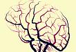 颅脑血管太复杂?主任和你聊解剖