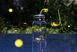 超声萤火虫成像识别乳腺术后标本中的微钙化
