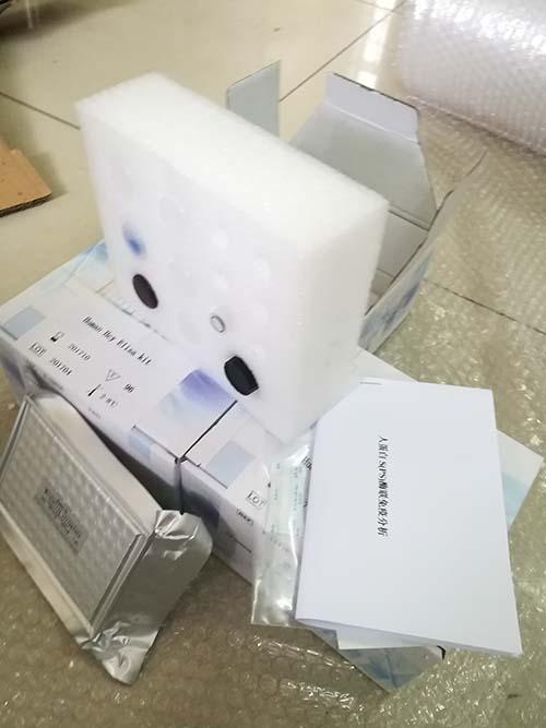 人性别鉴定试剂盒