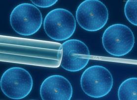 小鼠杂交瘤细胞;GRN图片