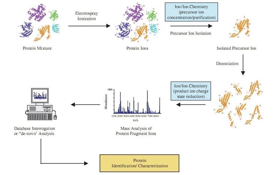 MRM/PRM定量蛋白组学分析
