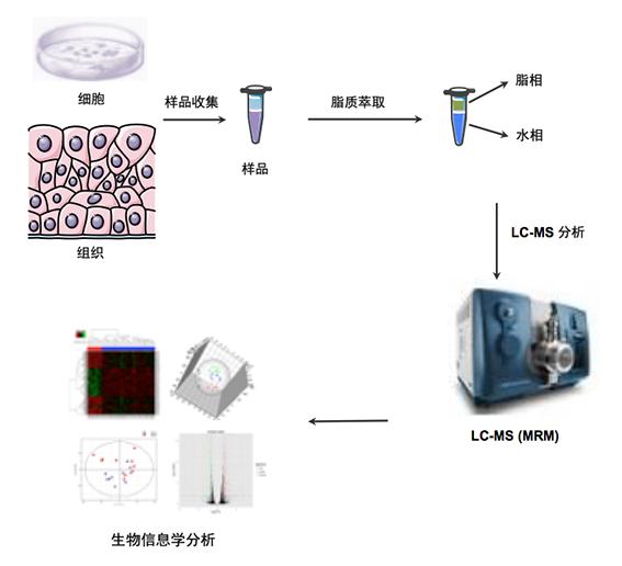 脂质代谢组学研究(Lipidomics)