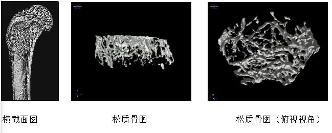 Micro-CT检测
