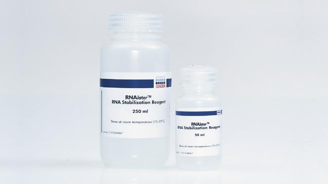 qiagen货号76106 RNAlater RNA Stabilization Reagent (250 ml)现