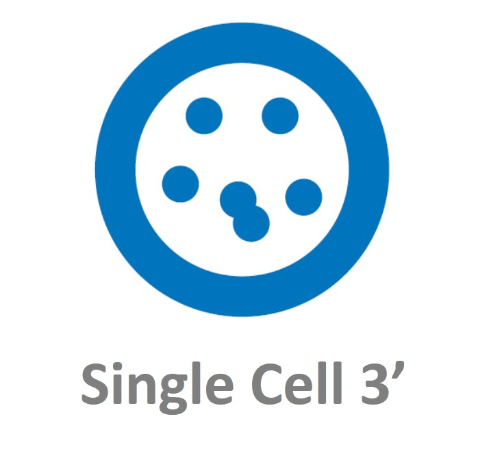 10x Genomics Chromium Single cell 3'单细胞转录组测序