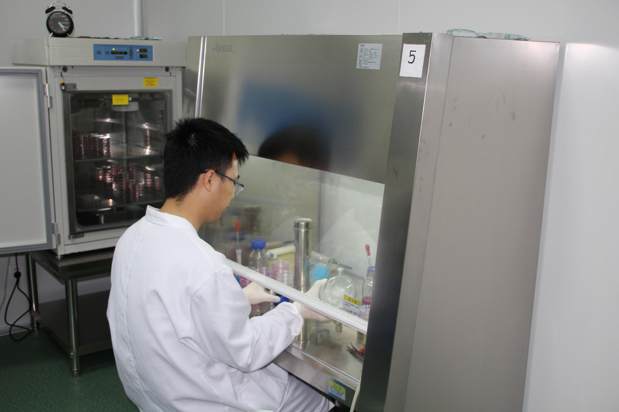 细胞培养与加药