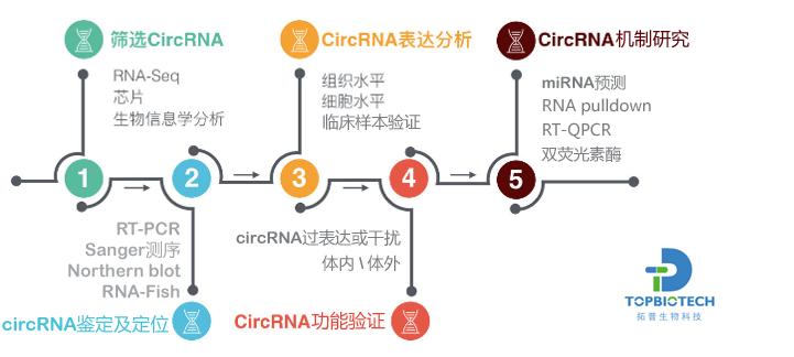 circRNA整体解决方案