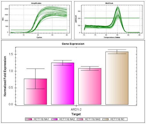 实时荧光定量PCR 技术服务