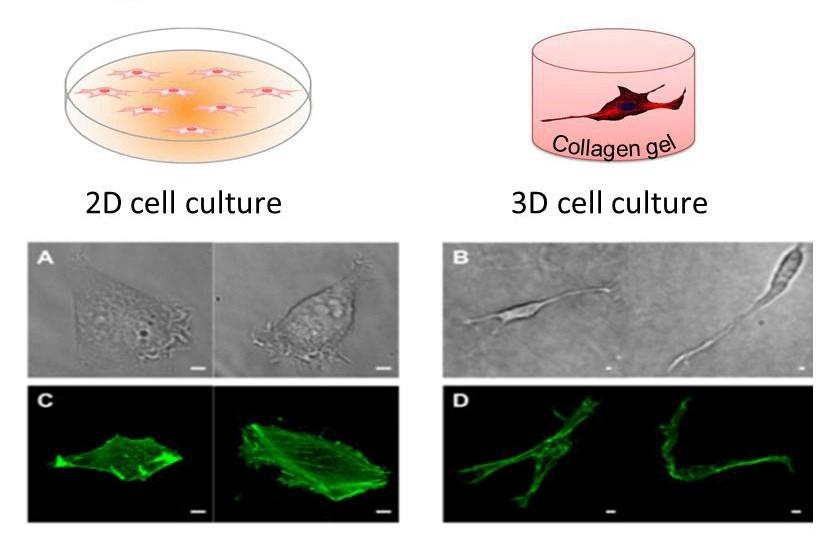 3D细胞培养 支架培养 水凝胶培养