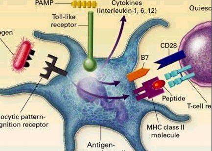 人雌激素受体相关受体α(ERRa)免疫组化试剂盒