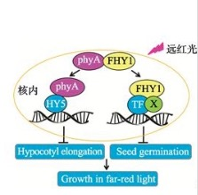 RNA免疫共沉淀(RIP)