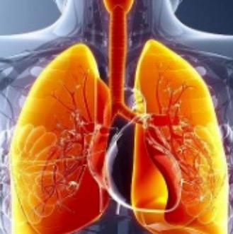 呼吸系统疾病模型