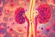 肾脏超声造影:评价微血流动力和灌注