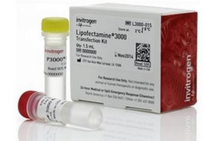 88必发娱乐官网_转染88必发comLipofectamine™ 3000 Transfection Reagent