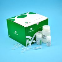 CommaXP™口腔拭子基因组DNA提取试剂盒,50次