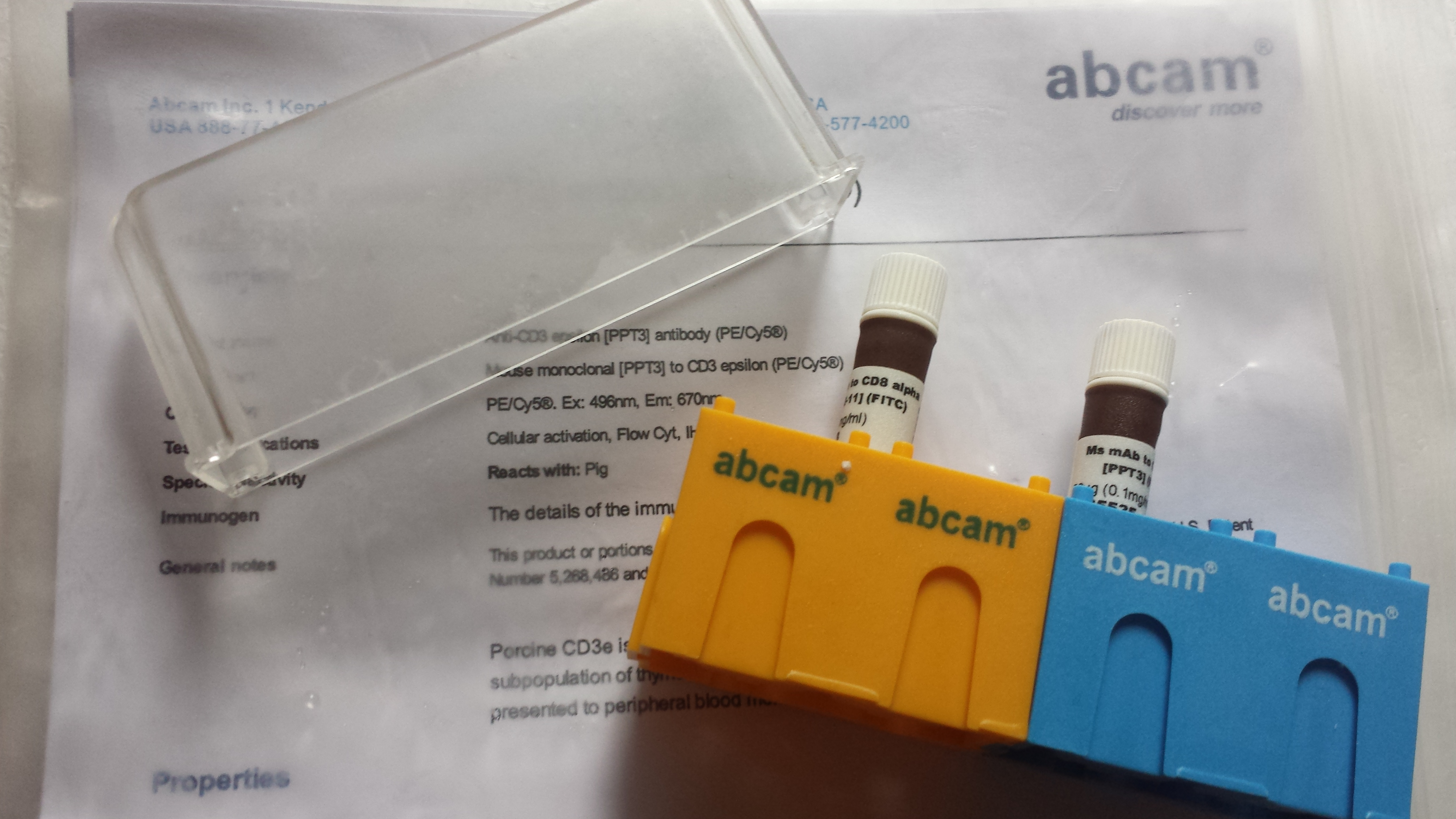 UBASH3A rabbit polyclonal antibody免疫
