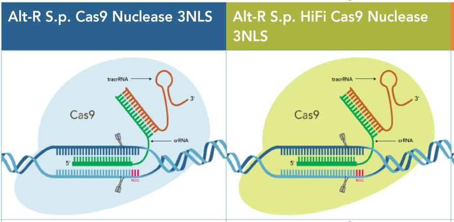 Alt-R™ CRISPR-Cas9 Nuclease