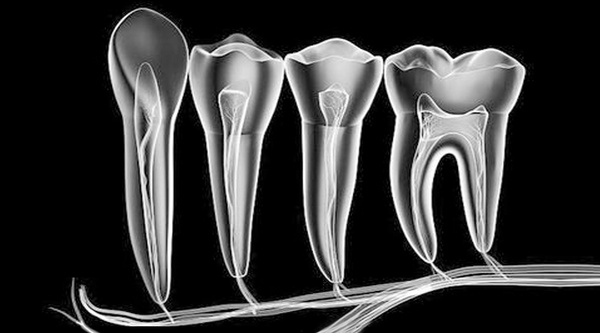 牙髓干细胞提取分离、鉴定与存储