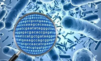 88必发娱乐最新网址_高通量测序服务 宏基因组测序
