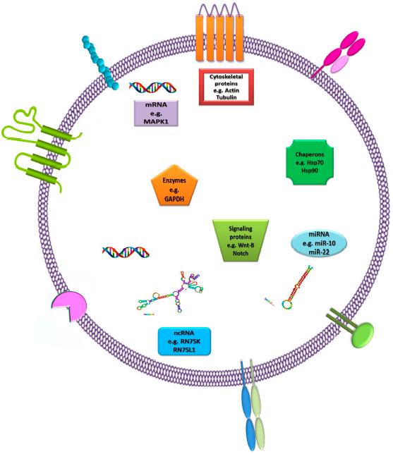 外泌体circRNA 测序