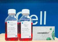 人胆管癌细胞(QBC-939)