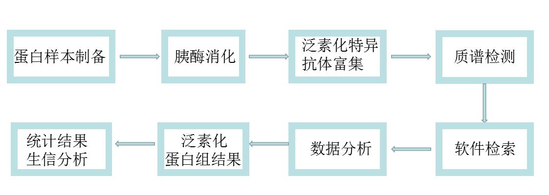 乙酰化、泛素化蛋白质组