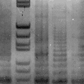 端粒酶活性检测实验服务