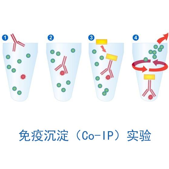 88必发com_免疫沉淀88必发com