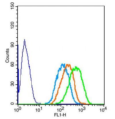 SYVN1滑膜细胞凋亡抑制物1抗体