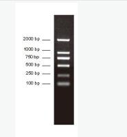 PCR分子量标准