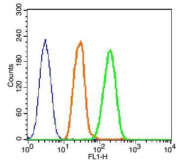 phospho-AKT1 (Tyr474)磷酸化蛋白激酶AKT1抗体
