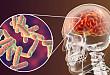 神经综述:登革病毒感染相关神经系统并发症