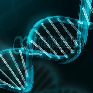 非链特异性转录组测序