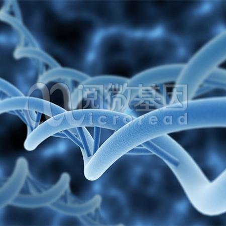 染色质免疫共沉淀测序(ChIP-Seq)