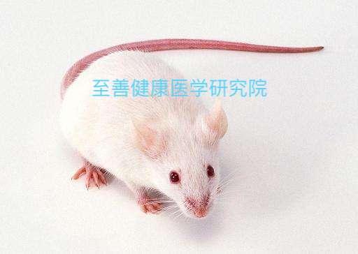 SPF级SAMP8小鼠SAMR1早老小鼠价格优惠