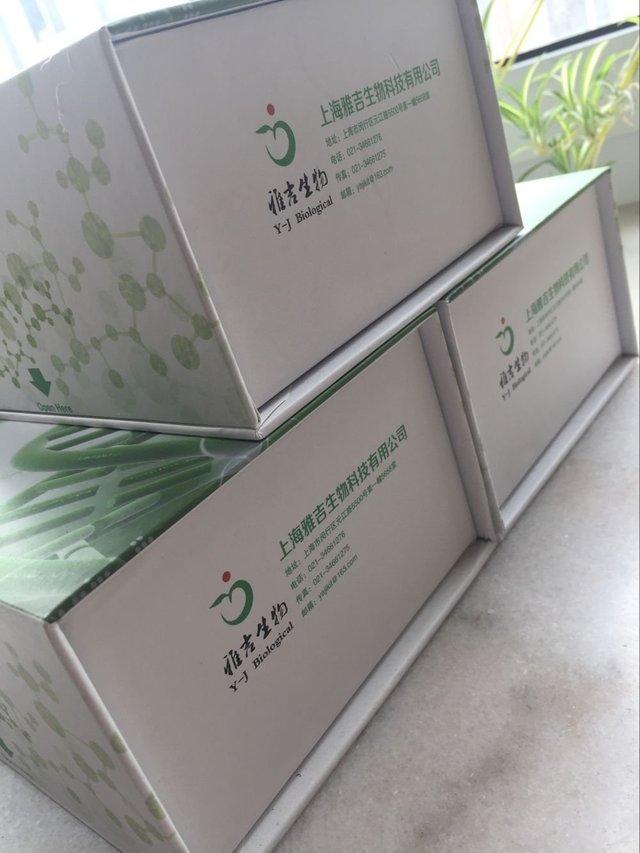 人DKK-1ELISA试剂盒