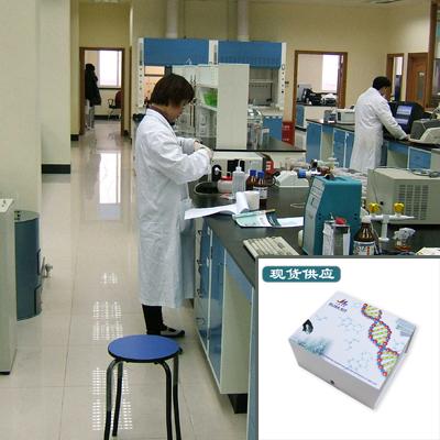 繁殖与呼吸综合征病毒抗体 PRRSV-Ab 检测试剂盒 规格/费用