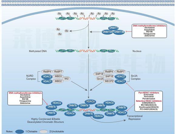 甲基化实验(Methylation experiment)——MSP电泳图/BSP测序图
