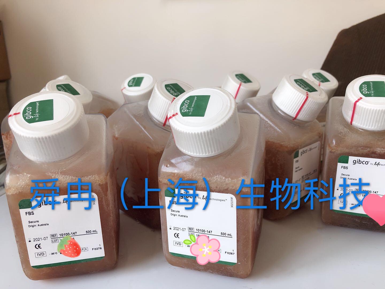 gibco10082-147热灭火胎牛血清(常备)供应